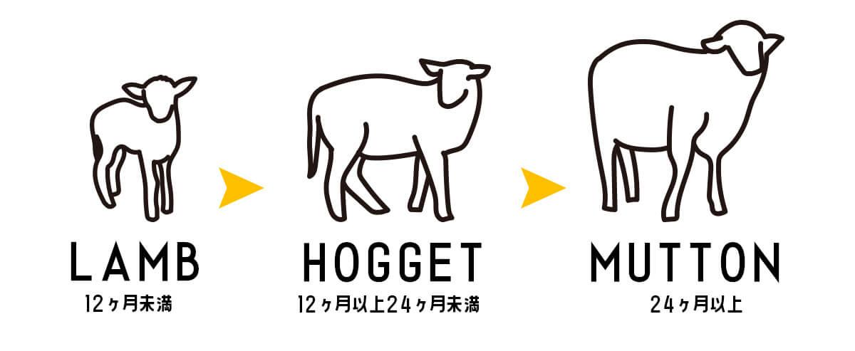 羊肉~ラム・マトン・ホゲットの違い