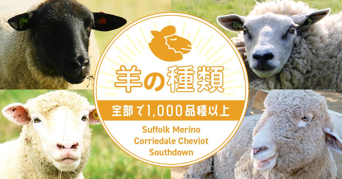 羊の品種は1,000種類以上