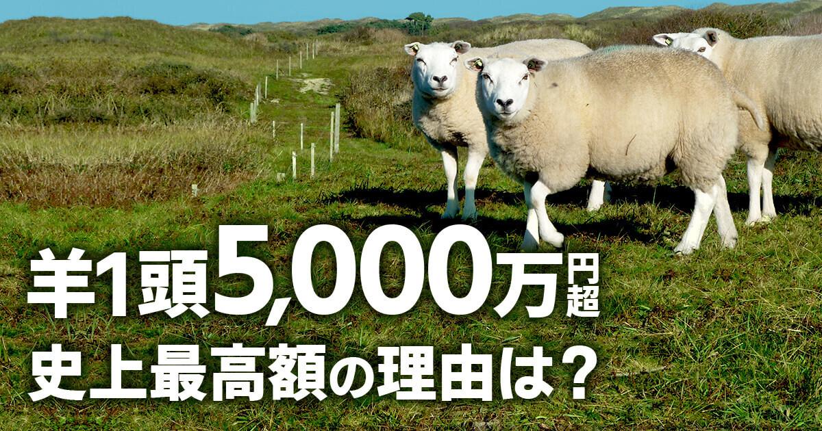 羊1頭が5,000万円以上で落札!?史上最高額のその理由とは?